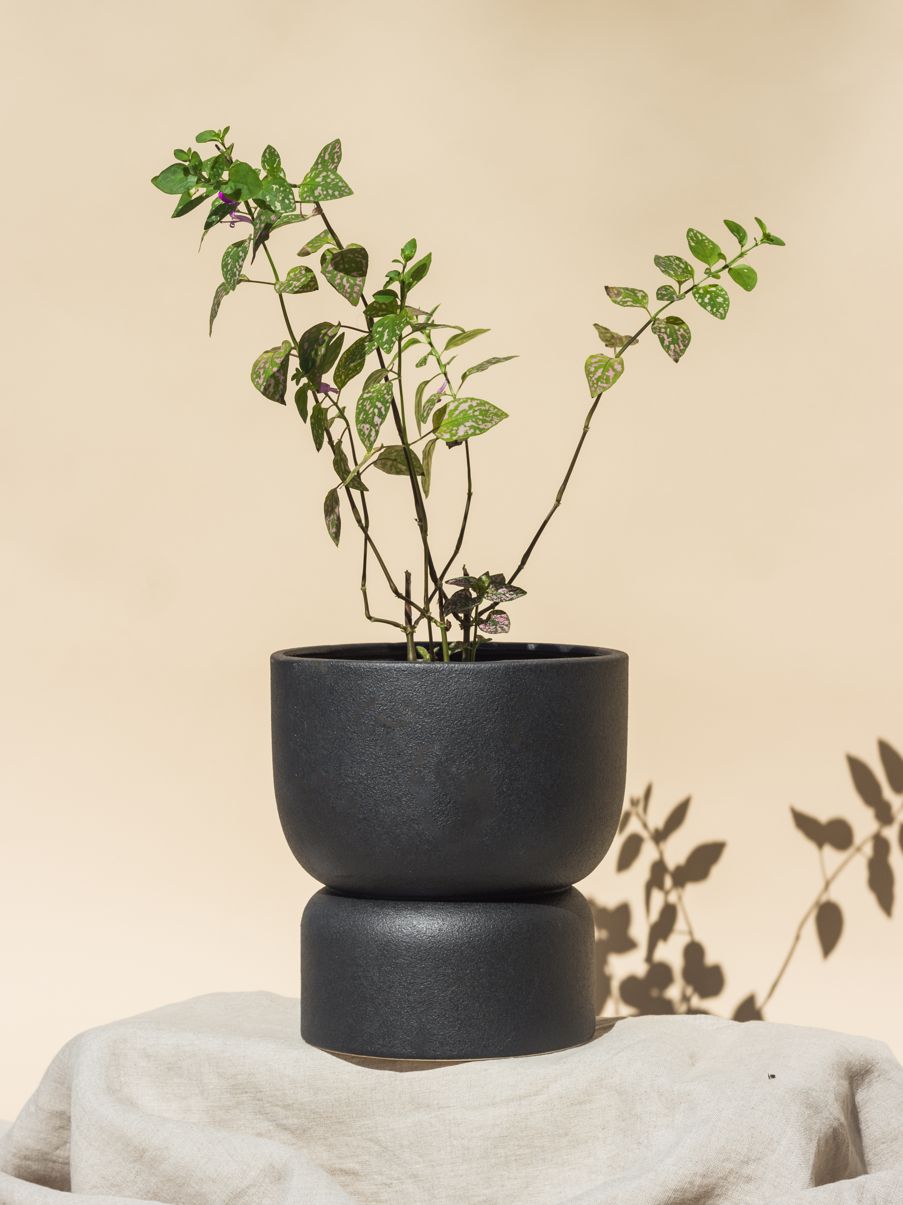 A plant in a pot  Description automatically generated