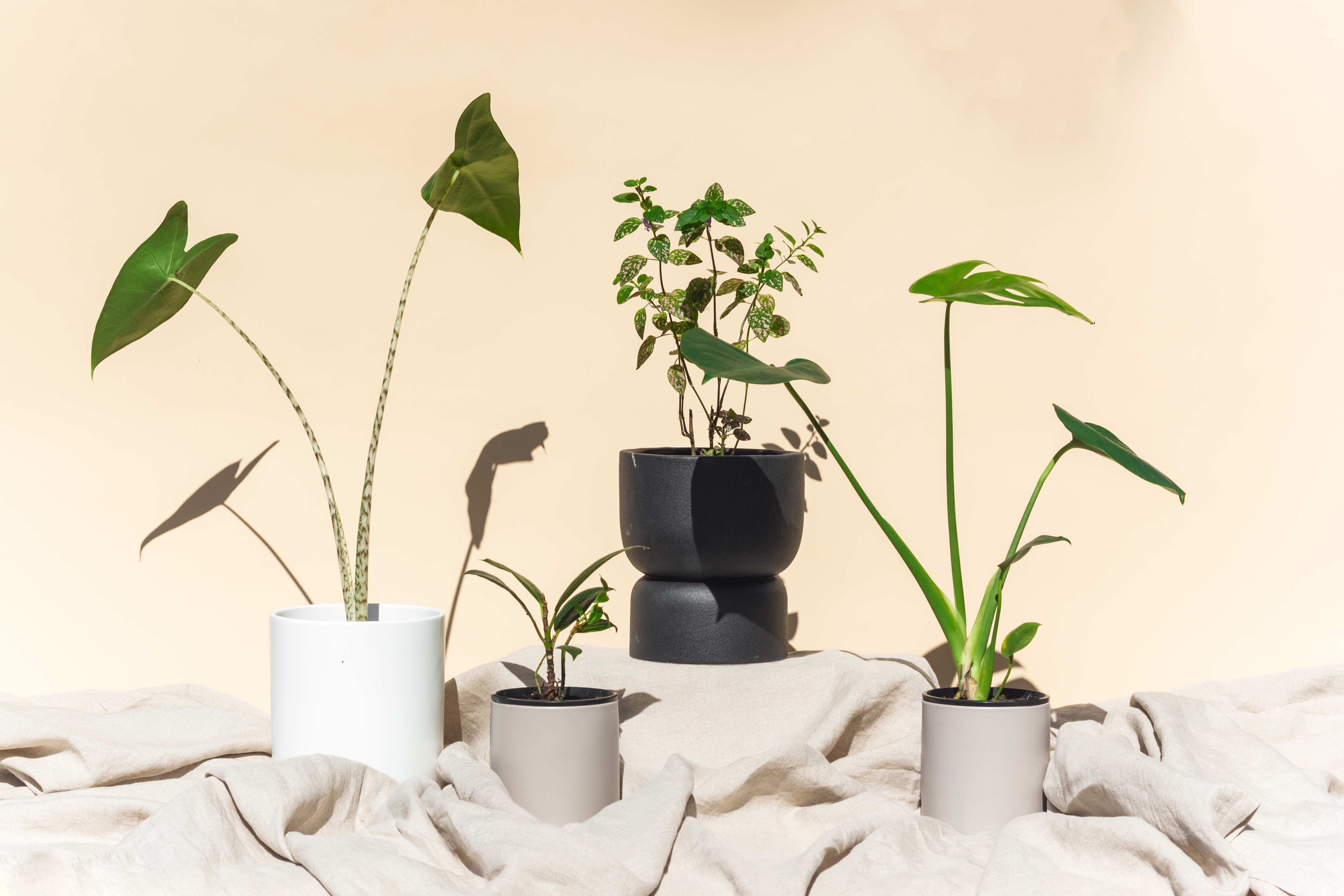 A group of potted plants  Description automatically generated with medium confidence